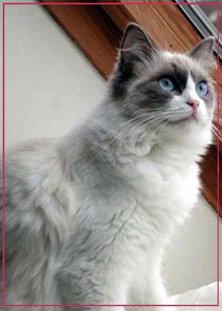 parassiti-interni-ed-esterni-del-gatto-come-riconoscerli-e-curarli