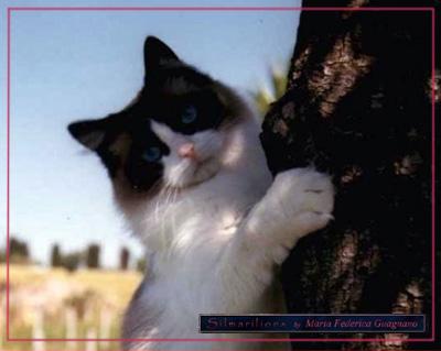 Lo svezzamento del gatto