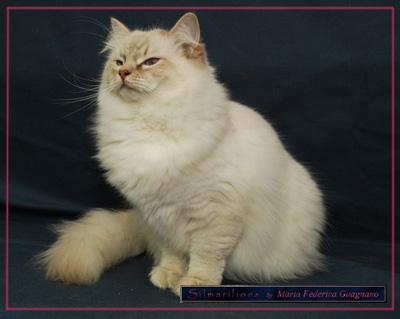 Le principali malattie del gatto - Leucemia felina