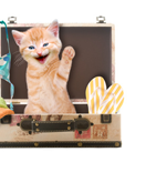 Tu e il tuo gatto in vacanza insieme, quello che devi sapere