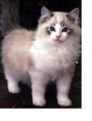 vaccinare-il-gatto-quello-che-devi-sapere-sulle-vaccinazioni